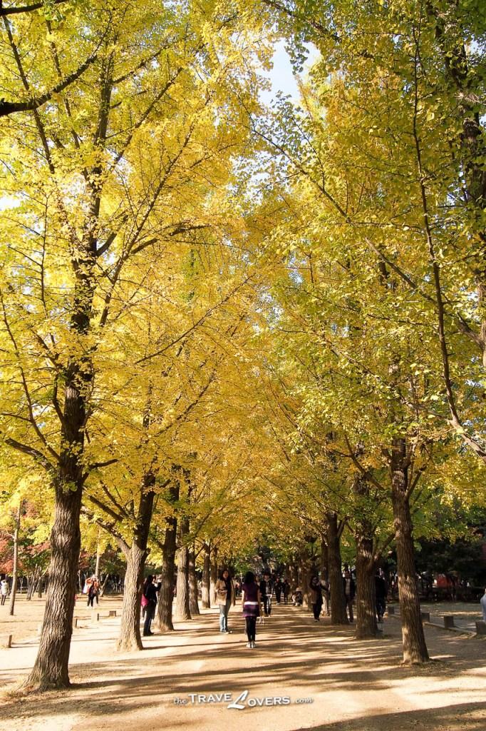 散步時看著金黃色的銀杏葉,很有秋天的感覺。