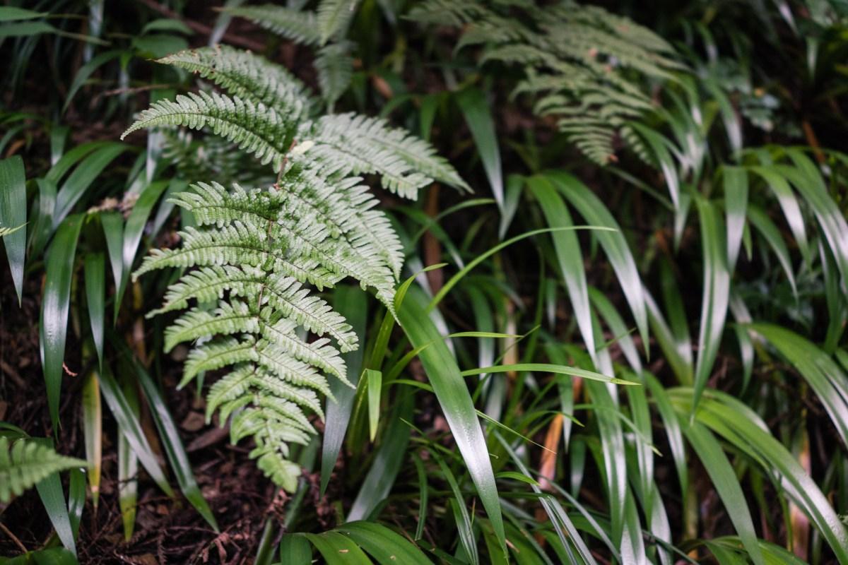 Plants on Mt. Takao