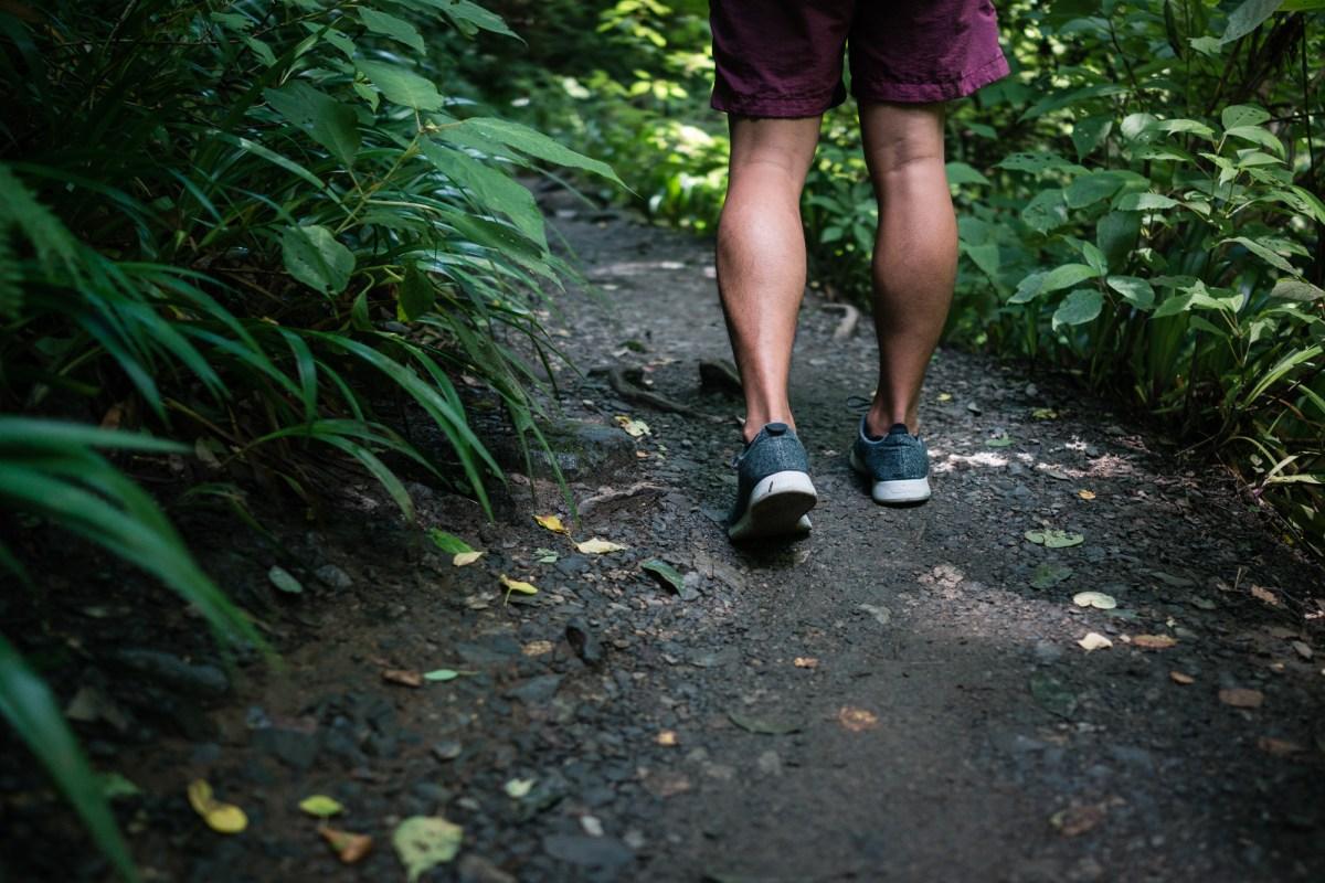 Walking Along Trail 6 on Mt. Takao