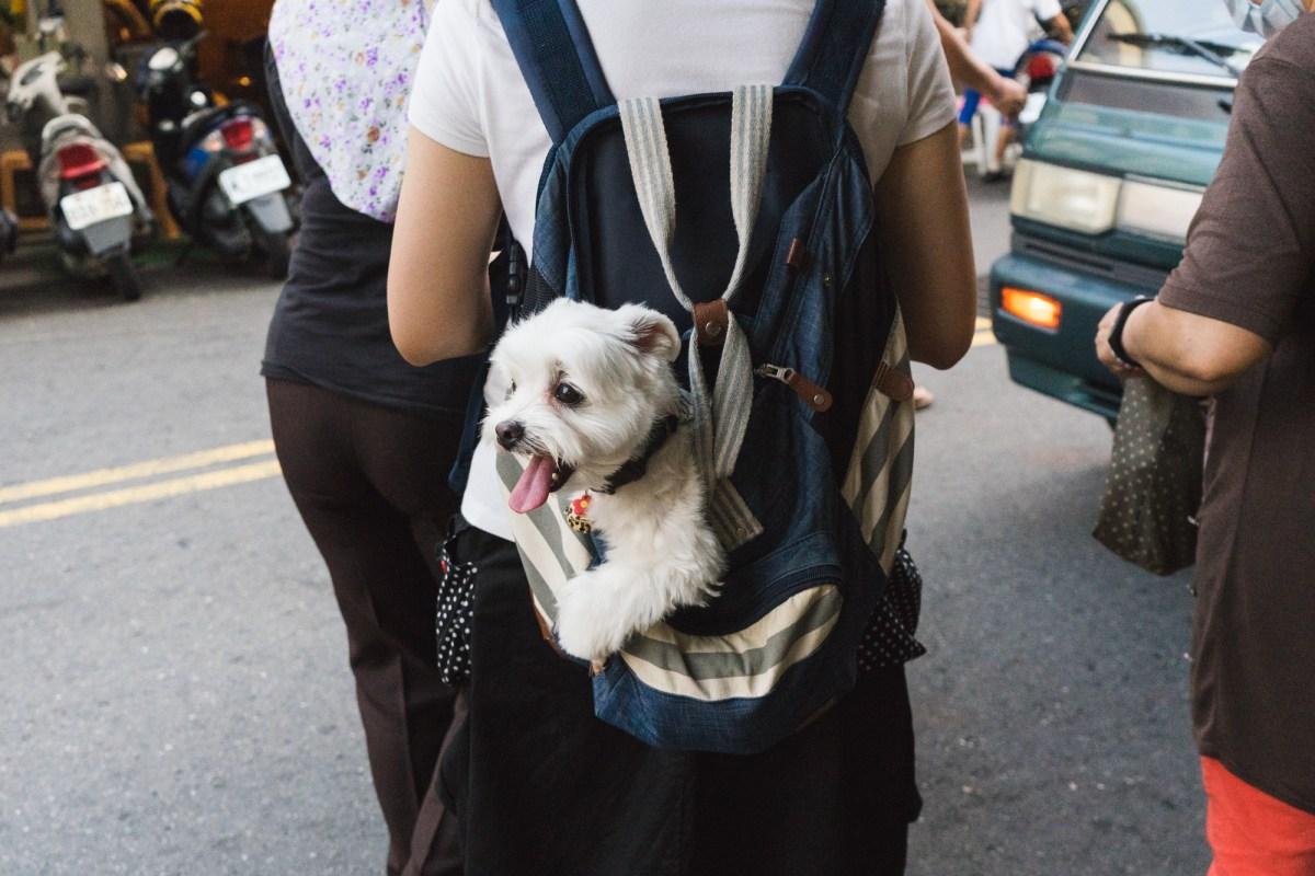 Taiwan Puppy