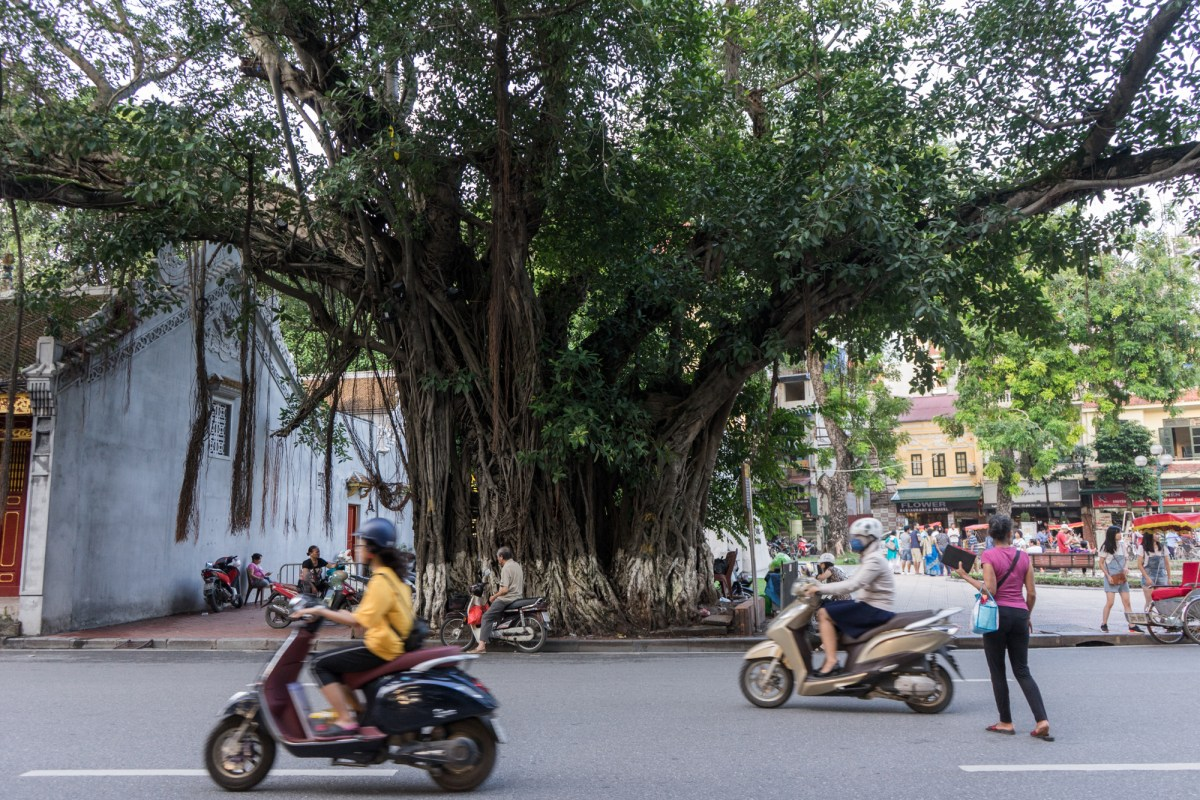 Trees of Vietnamese Cities