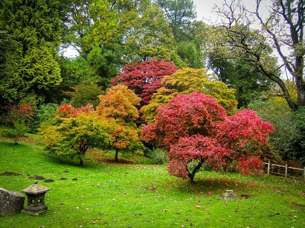 complete japanese maple guide