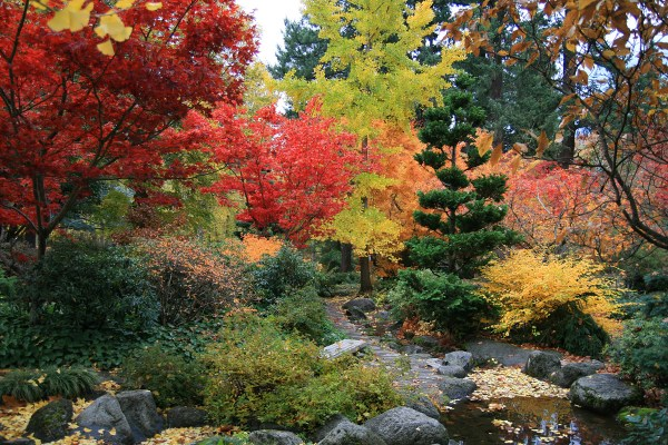 summer care of japanese maple