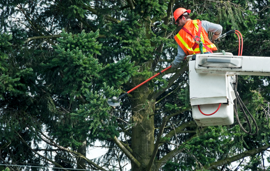 Image result for Tree Removal istock