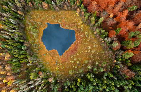 Forest Lake, Polonia