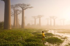 8 Mother Of The Forest, Madagascar