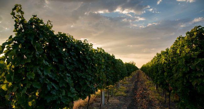 Vincon Romania: Cât e nevoie să investești la nivel financiar, timp, emoțional pentru a crește un business în industria vinurilor