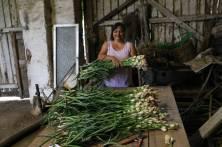 Sarbatoarea Tuberozelor, cultivator, foto2 Feri Teglas