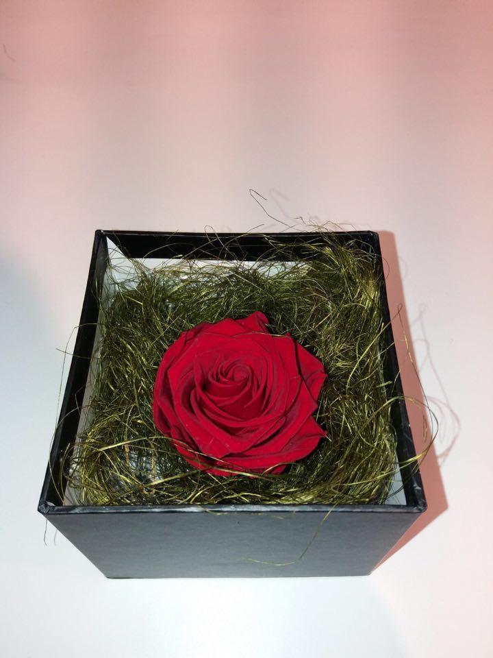 arkka trandafir criogenat3