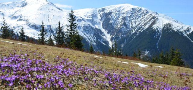 Fundația Conservation Carpathia – un proiect unic în România