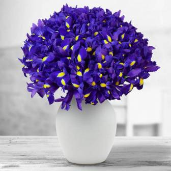 Floria8Ani_violet
