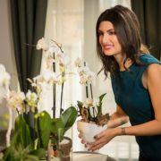 34% dintre clienții LEROY MERLIN aleg florile în ghiveci