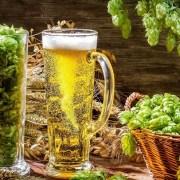 Burse de până la 150.000 de lei pentru a studia efectele consumului moderat de bere