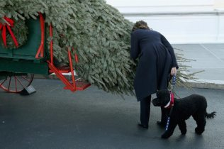 "WASHINGTON, DC - NOVEMBER 29: First lady Michelle Obama stoops to smell the official White House Christmas Tree with her dog Sunny as it was delivered to the North Portico of the White House November 29, 2013 in Washington, DC. According to the White House, ""This year's White House Christmas Tree, which will be on display in the Blue Room, is an 18.5-foot Douglas Fir grown by Chris Botek, a second generation Christmas Tree Farmer from Crystal Spring Tree Farm in Lehighton, Pennsylvania."" (Photo by Chip Somodevilla/Getty Images) ORG XMIT: 452628781"