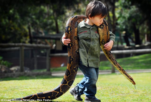 Snake charmer: Charlie's legs may wobble under the weight of Pablo but the snake holds no fears for him
