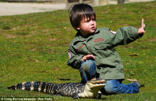 Dolittle: Charlie is comfortable with animals of all shapes and sizes, including Junior baby alligator Junior