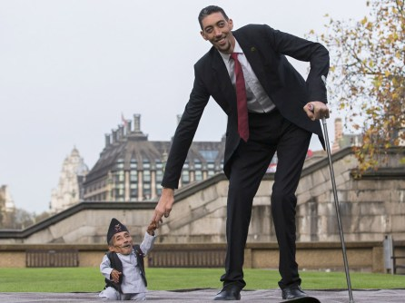 TOPSHOTS Chandra Bahadur Dangi, from Nepal, (L) the shortest adult to have ever been verified by Guinness World Records, poses for pictures with the world's tallest man Sultan Kosen from Turkey, during a photocall in London on November 13, 2014, to mark Guinness World Records Day. Chandra Dangi, measures a tiny 21.5in (0.54m) the same height as six stacked cans of beans. Sultan Kosen measures 8 ft 3in (2.51m). (Photo Credit: Andrew Cowie/AFP/Getty Images)