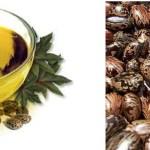 castor oil secrets