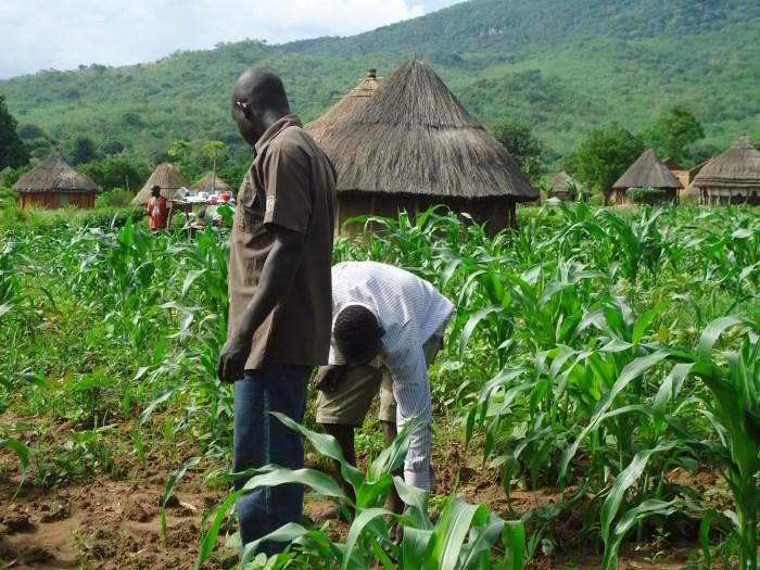 farmer agric youth jobs