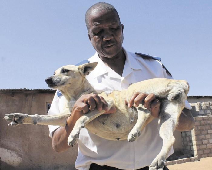 Mishack Matlou holds Stompie, the abused dog | Nyiko ka Ntsako/ Daily Sun