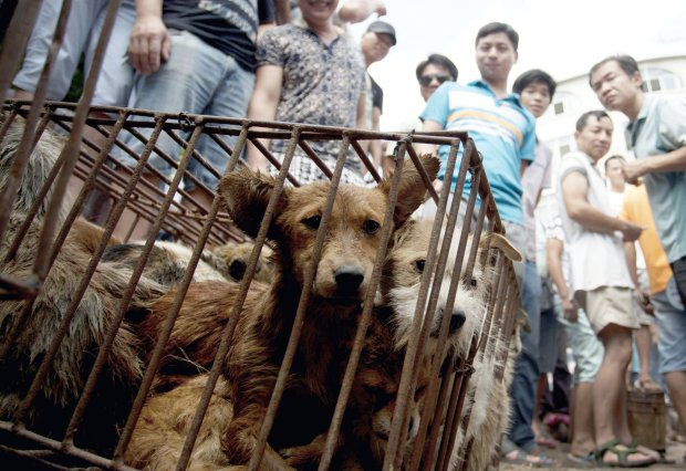 Annual Chinese dog meat festival