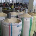 rice kebbi