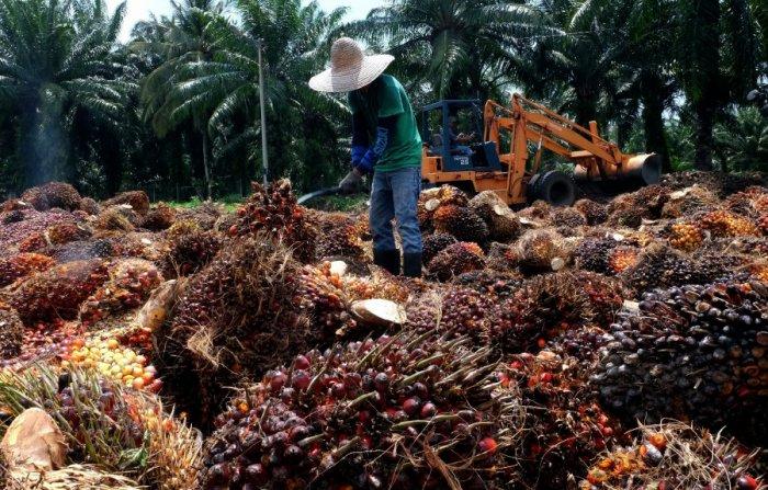 Palm Oil, European Union, Kurt Cornelis, Yewande Sadiku, Ladi Katagum, Nigeria