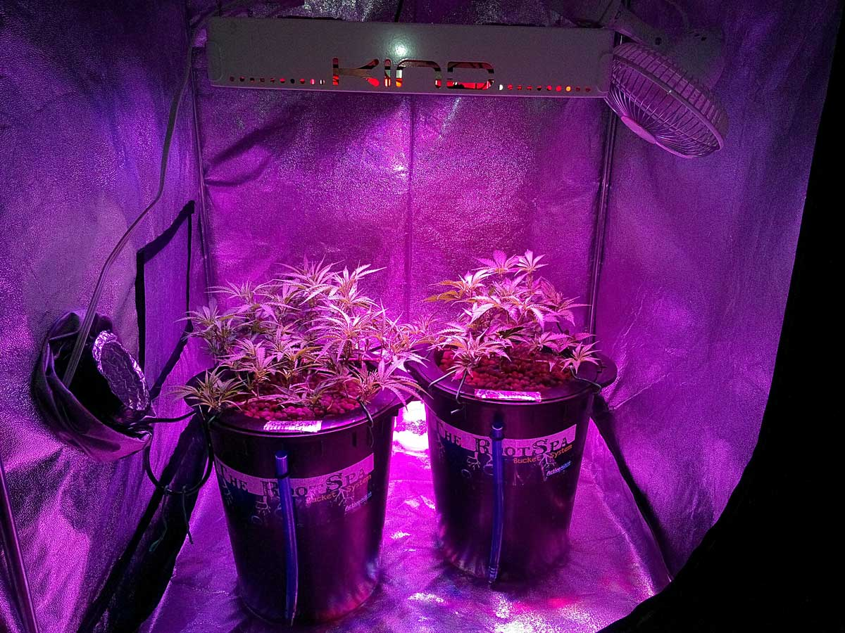 Top 3 Best Led Grow Lights For Your Cannabis The Trent