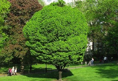 Green Tree Repos Mobile Home List Cmsfc