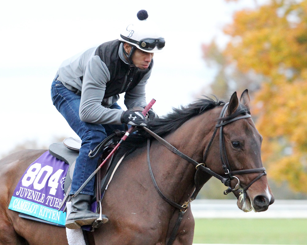 Camelot Kitten - Morning Training - Keeneland Race Course - 1026
