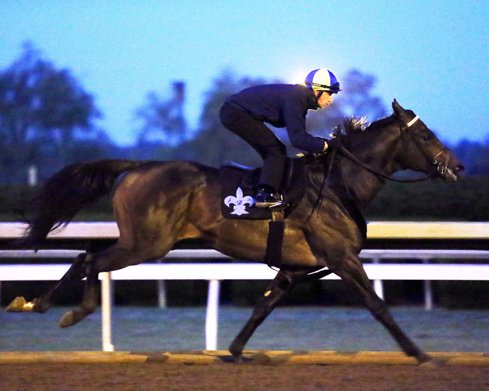 Exaggerator breezing at Keeneland - Keeneland Photo