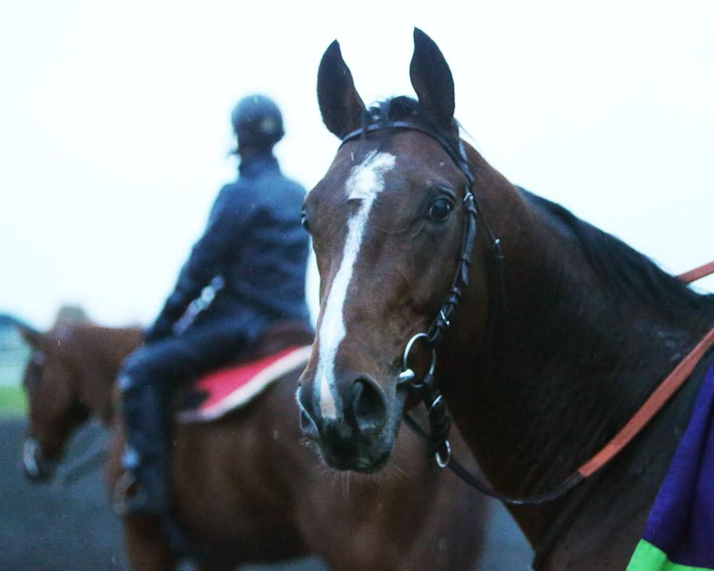 Karakontie - Morning Training - Keeneland Race Course - 102715