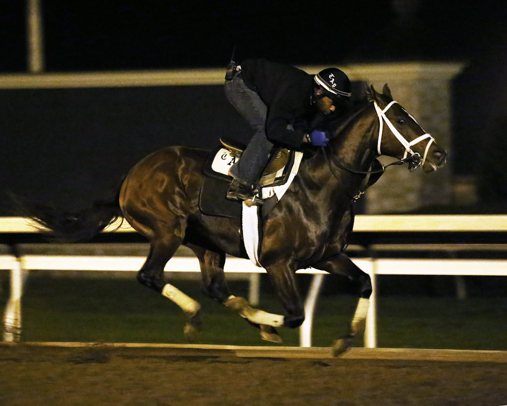 Mshawish - Morning Workout - Keeneland Race Course - 102315