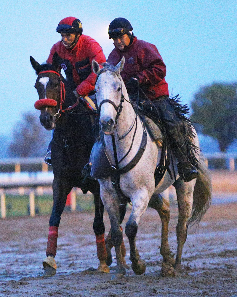 My Sweet Addiction - Morning Training - Keeneland - 102715