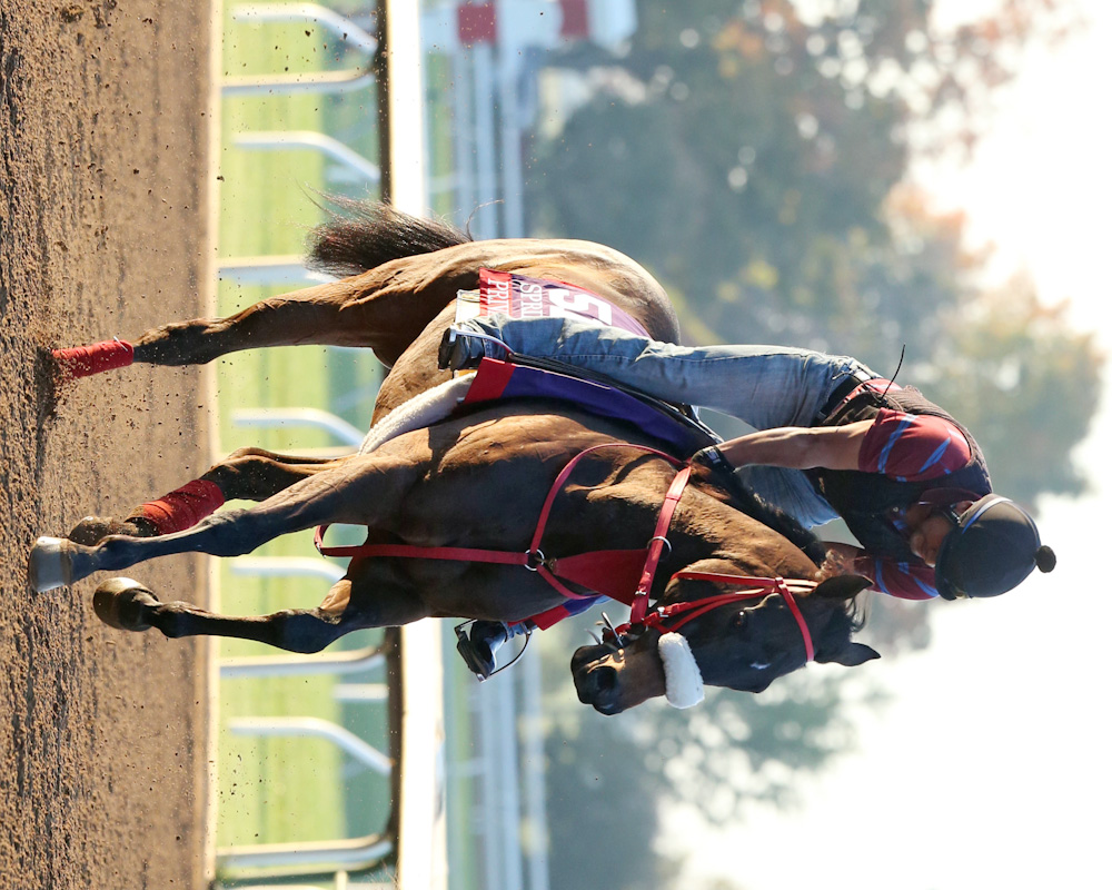 Private Zone - Morning Workout - Keeneland Race Course - 102315