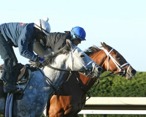 Race Day (outside) and Curalina (inside) breezing together at Keeneland - Keeneland Photo