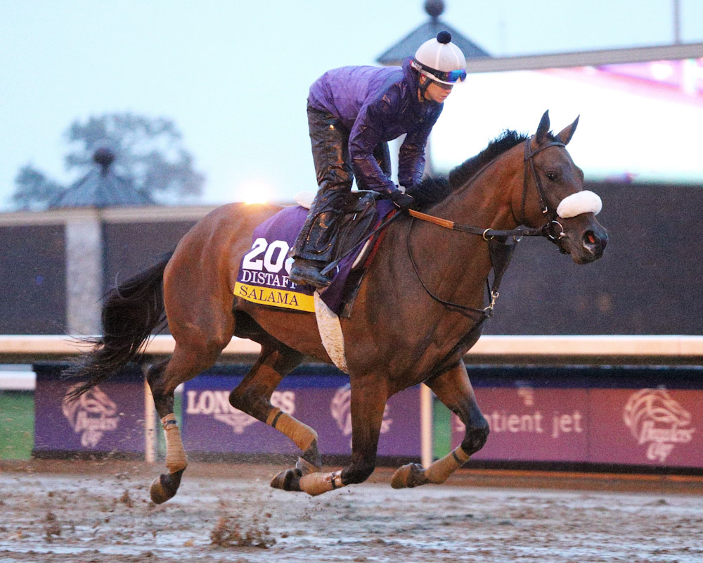 Salama- Morning Training - Keeneland - 102715