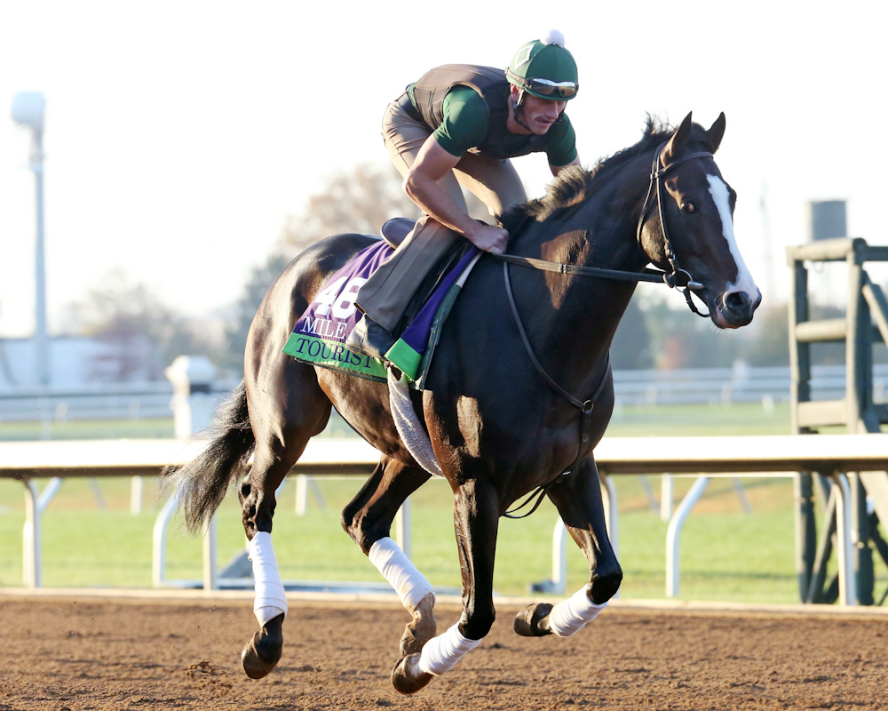 Tourist - Morning Workout - Keeneland Race Course - 102315