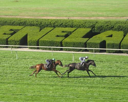 The Wesley Ward-trained pair of Undrafted and Sunset Glow train at Keeneland on October 6th - Keeneland Photo