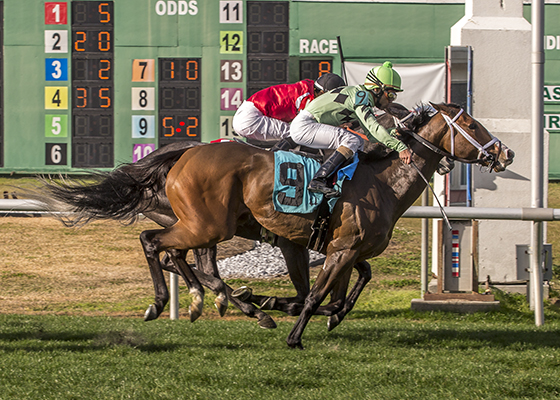 Cash Control, wins the Daisy Devine Stakes at the Fair Grounds Race Course in New Orleans, LA February 20, 2016. The winning jockey was Shaun Bridgmohan. Photo By Lou Hodges, Jr. / Hodges Photography