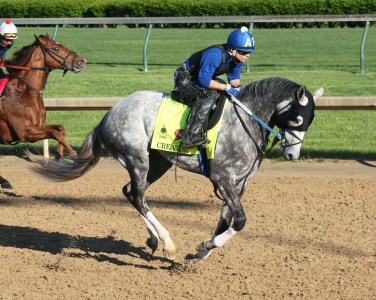 Creator galloping at Churchill Downs - Coady Photography