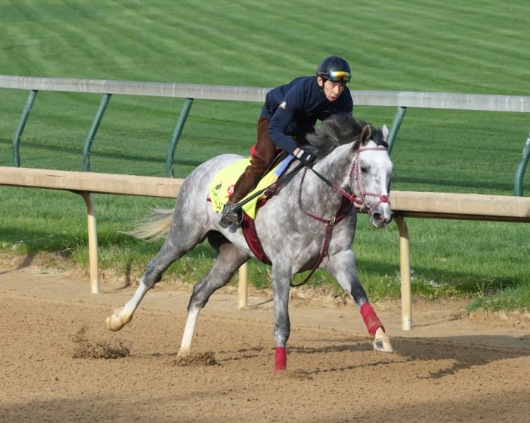 Lani galloping at Churchill Downs - Coady Photography