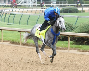 Mohaymen gallops at Churchill Downs - Coady Photography