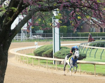 Mohaymen breezing at Churchill Downs on April 20th - Coady Photography