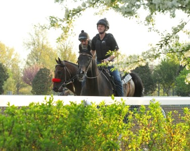 Nyquist training at Keeneland - Coady Photography/Keeneland Photo