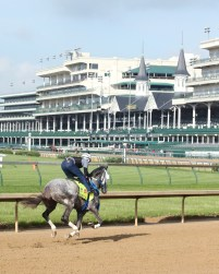 Creator breezing at Churchill Downs - Coady Photography