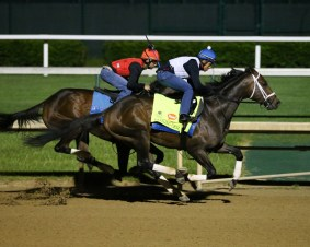 Dazzling Gem breezing at Churchill Downs - Coady Photography