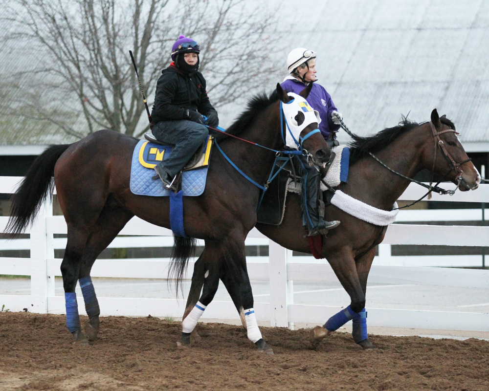 Laoban Could Change Strategy in Preakness Stakes