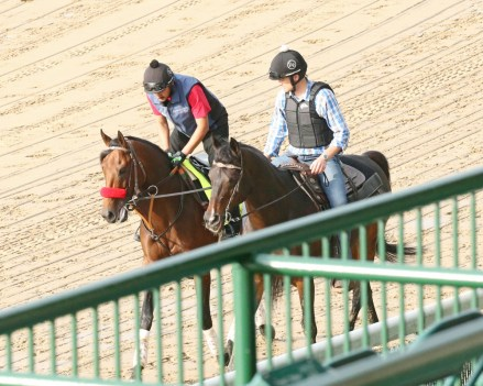 Nyquist jogging at Churchill Downs on May 1st - Coady Photography