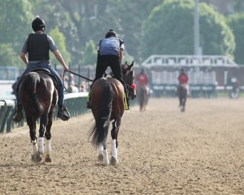 Nyquist jogging at Churchill Downs - Coady Photography